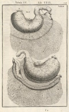 Anatomical print - stomach and colon - by Spigelius - Engraving - 17th c