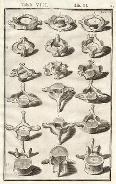 Anatomical print - vertebrae from the spine - by Spigelius - Engraving - 17th c.
