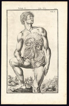 Rare anatomical print - Male abdomen by Spigelius - Engraving - 17th century