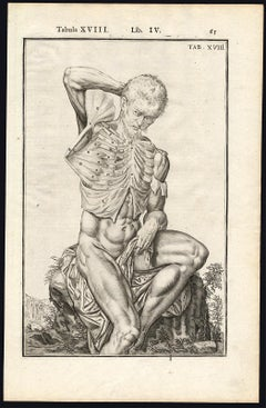 Set of 2 anatomical prints - Man's chest by Spigelius - Engraving - 17th Century