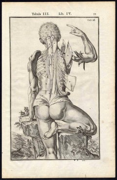 Set of 5 Anatomical Prints Man's muscles by Spigelius - Engraving - 17th Century