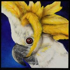 Lesser Sulphur Crested Cocatoo