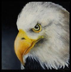 Saved  (American Bald Eagle)
