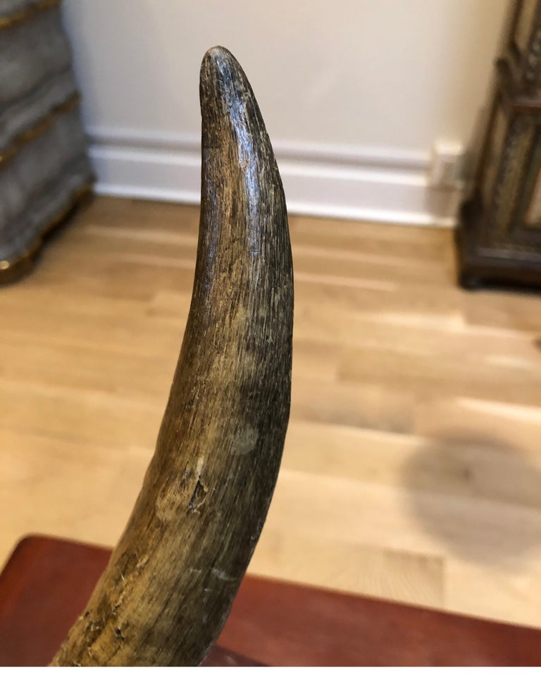 African Horn on Lucite after Karl Springer For Sale 6