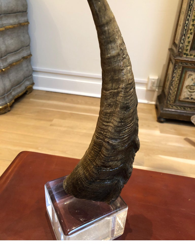 African Horn on Lucite after Karl Springer In Good Condition For Sale In Los Angeles, CA