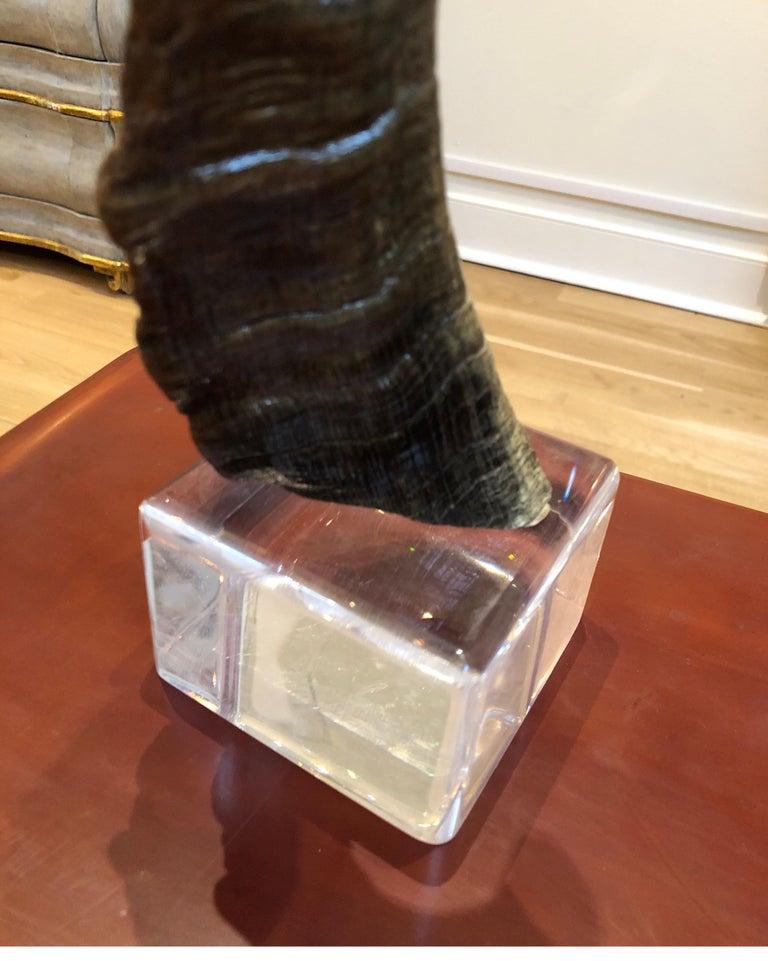 African Horn on Lucite after Karl Springer For Sale 4
