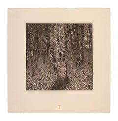 Birch Forest by Gustav Klimt, Das Werk Gustav Klimts landscape nature collotype