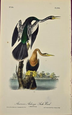 """American Anhinga"", an Original First Edition Audubon Hand Colored Lithograph"