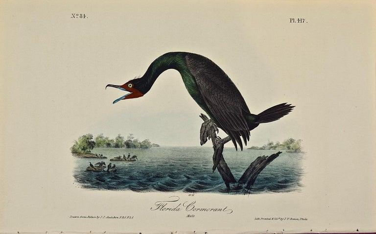 "John James Audubon Animal Print - ""Florida Cormorant"", an Original First Edition Audubon Hand Colored Lithograph"