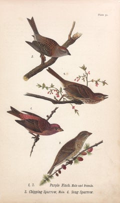 Purple Finch / Chipping Sparrow / Song Sparrow; Plate 20