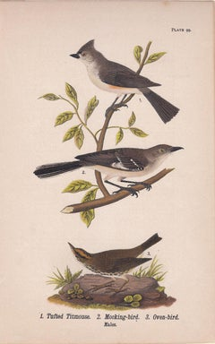 Tufted Titmouse / Mocking-bird / Oven-bird; Plate 99