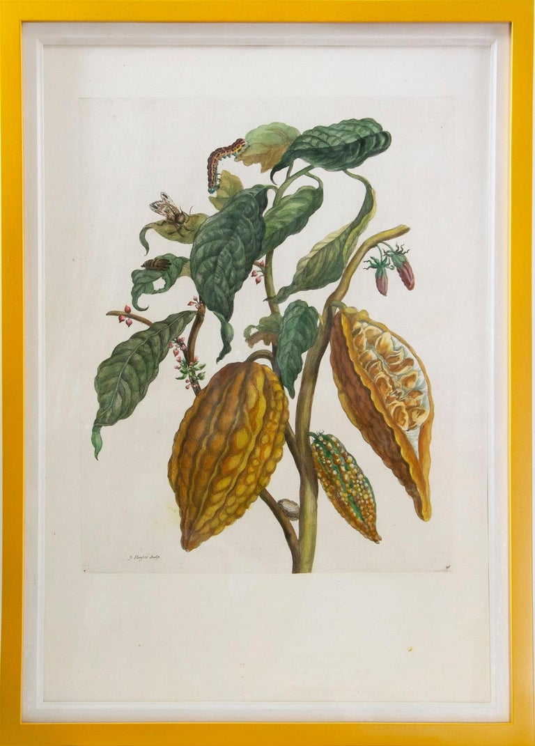 Merian - A Group of Six Flowers, Insects and Fruits.   - Print by Maria Sybilla Merian