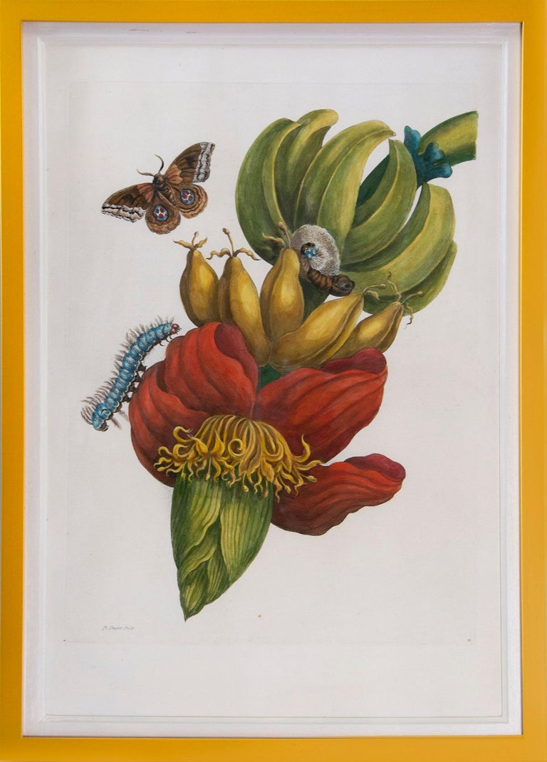 Merian - A Group of Six Flowers, Insects and Fruits.   - Naturalistic Print by Maria Sybilla Merian
