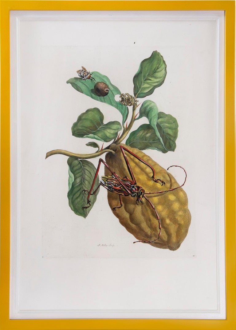 Merian - A Group of Six Flowers, Insects and Fruits.   - Beige Animal Print by Maria Sybilla Merian
