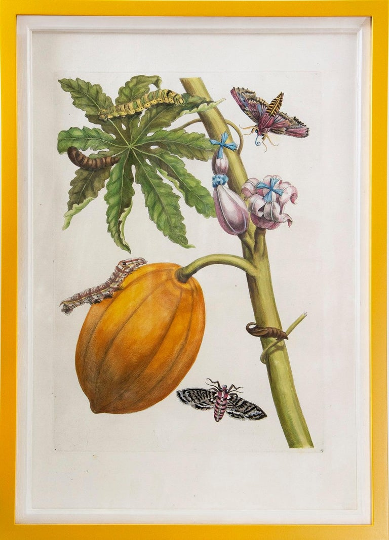 Merian - A Group of Six Flowers, Insects and Fruits.   For Sale 1