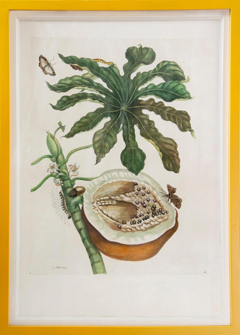 Maria Sybilla Merian Animal Print - Merian - A Group of Six Flowers, Insects and Fruits.