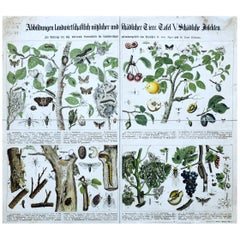 Agriculturally Useful or Harmful Insects, Vintage Wall Chart