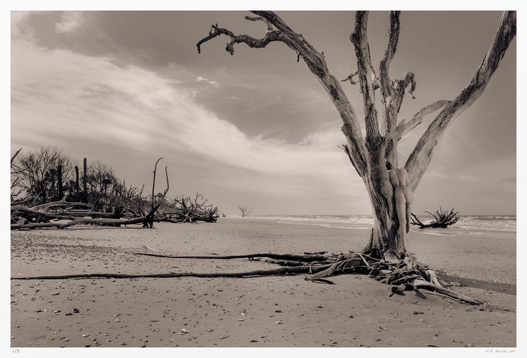 A solitary figure is nestled in the lower limbs of a tree at the waterline. The sepia tones camouflage her body, hidden in plain sight, until it is discovered.    The allure of the coast played an immense role in the development of my visual style.