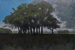 Groupe d'arbres dans la plaine