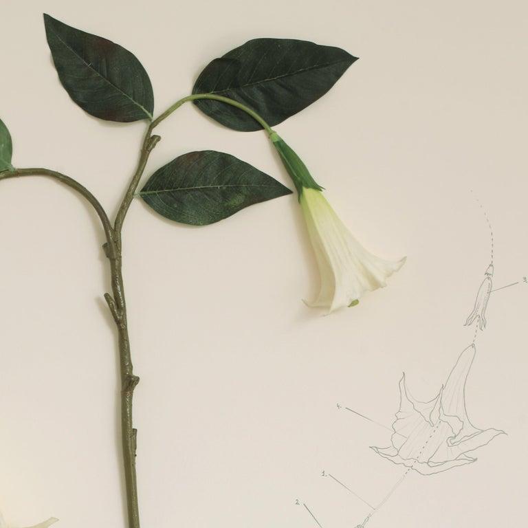 Herbario de plantas artificiales. Expedición México (Floripondio) - Contemporary Mixed Media Art by Alberto Baraya