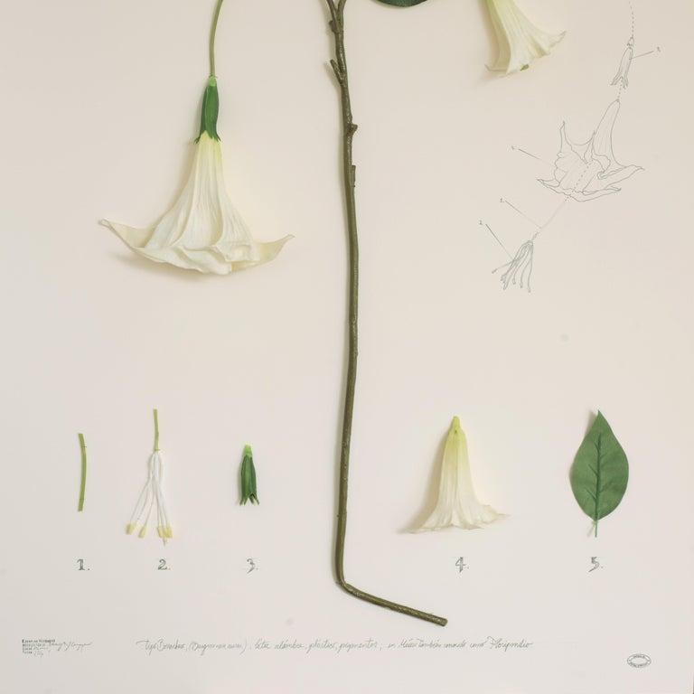 Herbario de plantas artificiales. Expedición México (Floripondio) For Sale 1