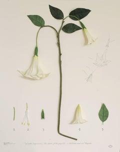 Herbario de plantas artificiales. Expedición México (Floripondio)