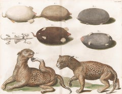 Leopards and Mole Engraving