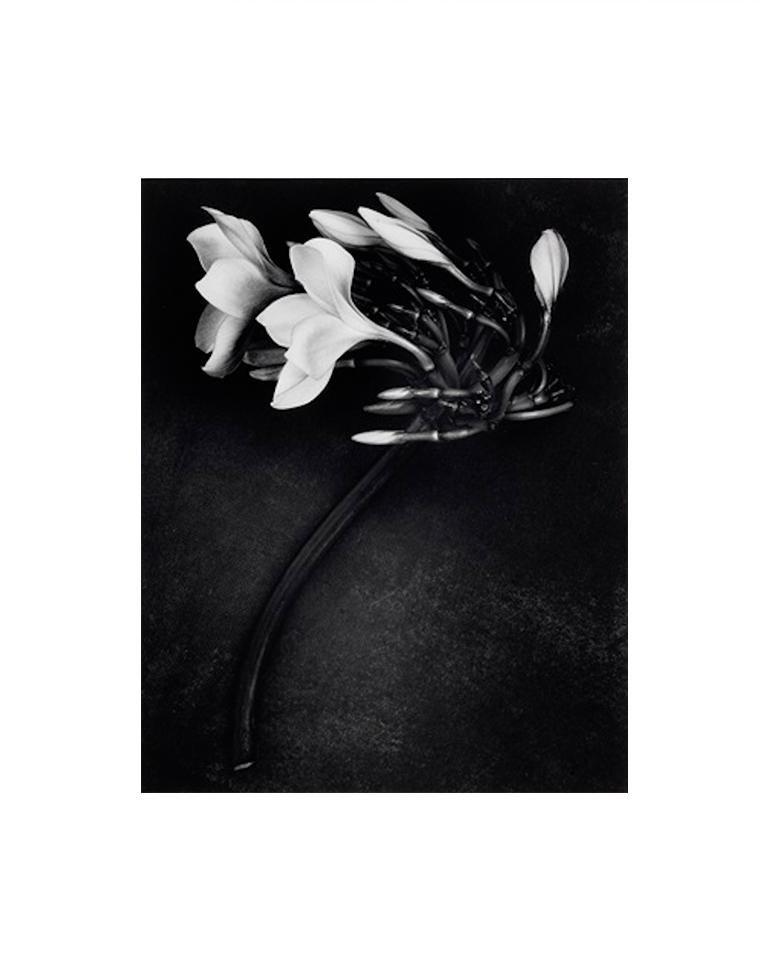 """Orchid, 1988"", Gelatin Silver Print"