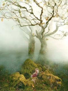 Tree Fairy Glen – Albert Watson, Skye, Tree, Nature, Landscape, Art, Abstract