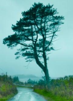 Tree Fairy Glen View from Windshiel  – Albert Watson, Skye, Tree, Landscape, Art
