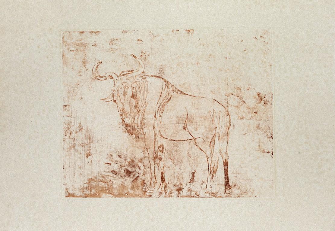 Buffalo - Original Etching on Paper by Aldo Pagliacci - 1971
