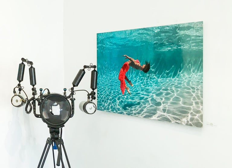 Flurry - underwater photograph - print on aluminum - Contemporary Photograph by Alex Sher