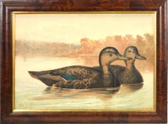 Alexander Pope, Chromolithograph of Ducks, 1878