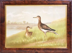 Alexander Pope, Chromolithograph of Upland Plover, 1878