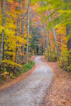 """""""Country Road"""" Color Nature Photography, Landscape, Trees, Autumn, Fall Foliage"""