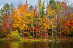 """""""Farewell"""", Color Nature Photography, Landscape, Trees, Autumn, Yellow"""