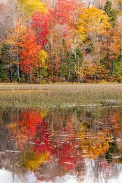 """Past Peak"", Color Nature Photography, Landscape, Trees, Autumn, Fall Foliage"