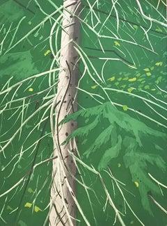 """Spruce"""