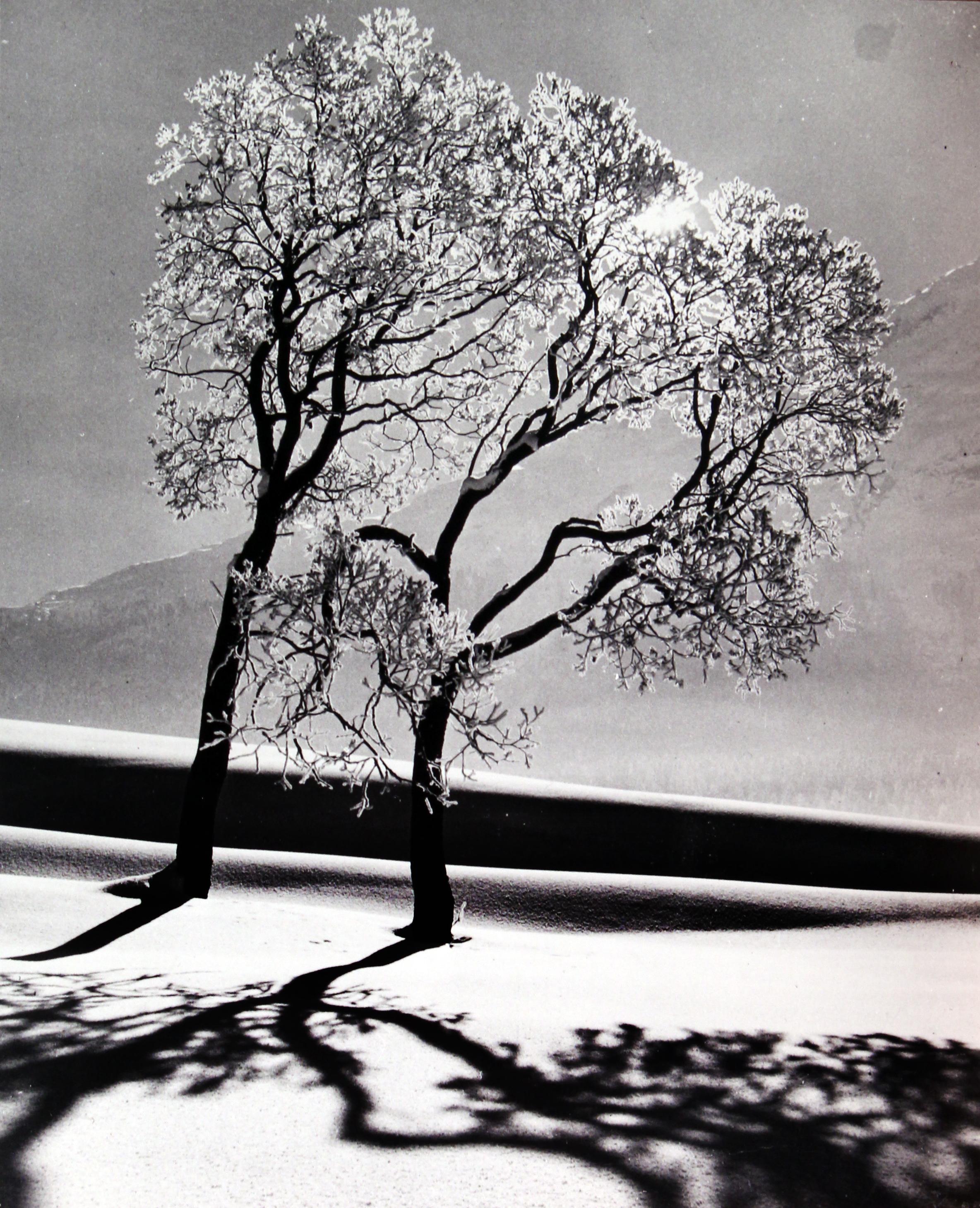 Trees In Snow, Near St Moritz, Switzerland, 1947 - Alfred Eisenstaedt