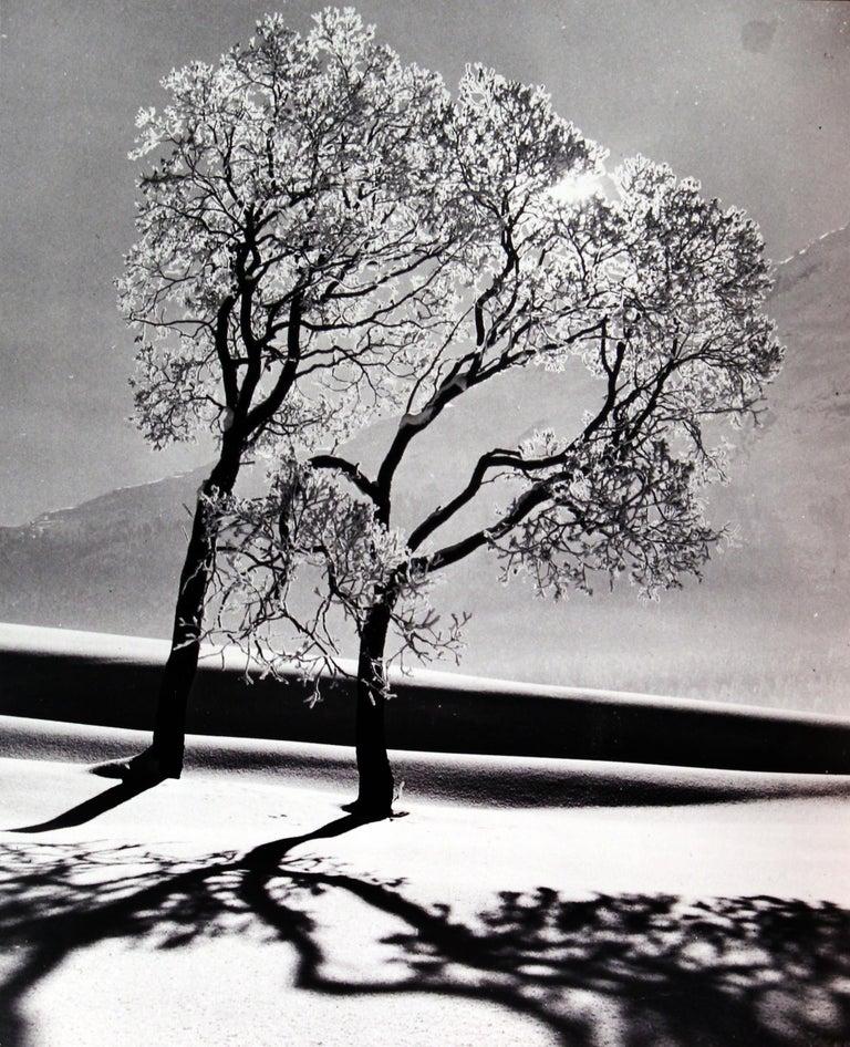 Trees In Snow, Near St Moritz, Switzerland, 1947 - Alfred Eisenstaedt  - Photograph by Alfred Eisenstaedt