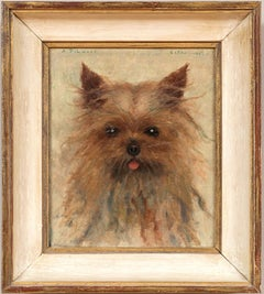 Dog Portrait of a Yorkshire Terrier