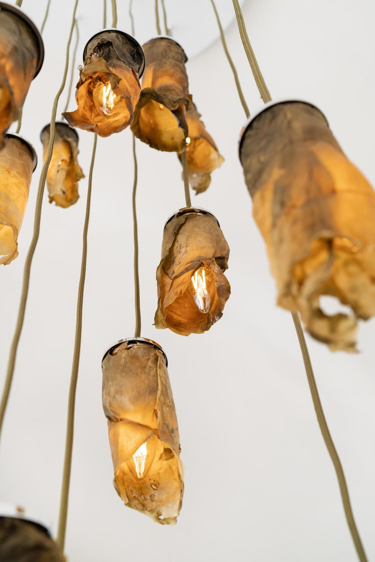 Algae is molded into the cylindrical lamp shades that glow from the interior. The algae pieces can be grouped into different lengths to form a chandelier.