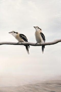 Carry On Kookaburra