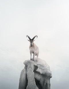 Intent Ibex