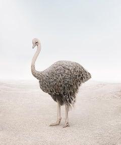 Onward Ostrich
