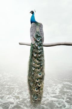 Patience Peacock