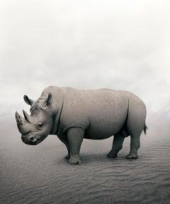 Restful Rhino