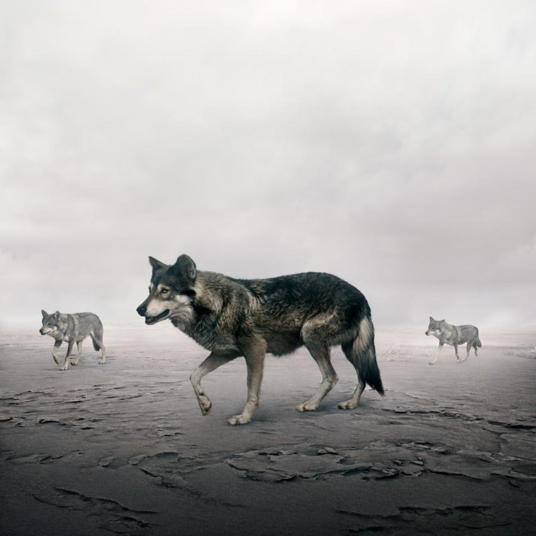 Alice Zilberberg Animal Painting - This Way Wolves
