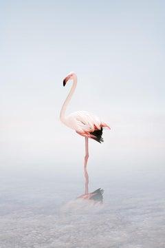 Wondering White Flamingo