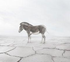 Zen Zebra